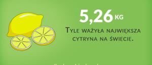 największa cytryna