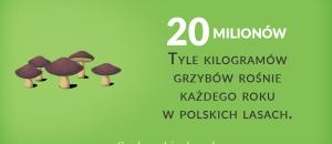 grzyby w Polsce