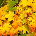 jesień liście